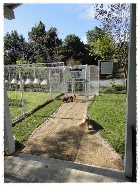 旅犬Lani&Leaのほほん風船記-狗の郷