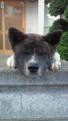 $沙魚のお気楽日記-隣の犬