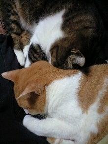 ずれずれブログ…湘南で猫と暮らせば…-121019_1706~0001.jpg