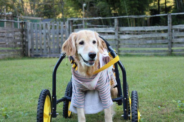 $クミーゴの保護犬ブログ