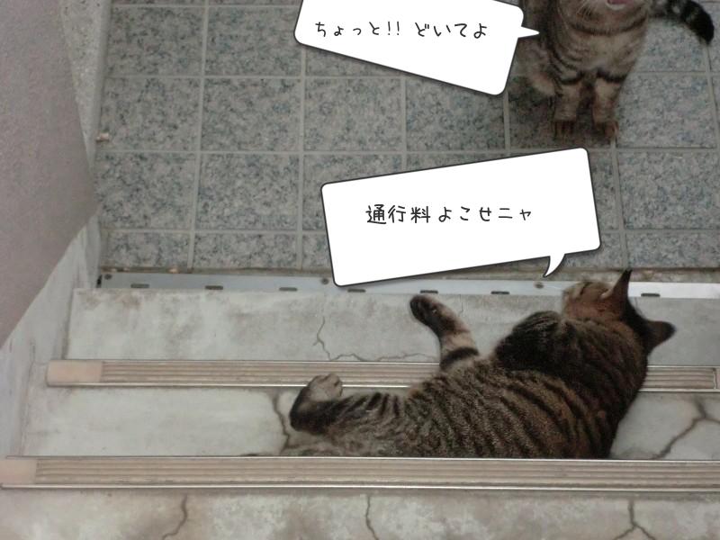 むぎ(麦)☆のブログ