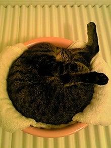 ずれずれブログ…湘南で猫と暮らせば…-121016_1547~01.JPG