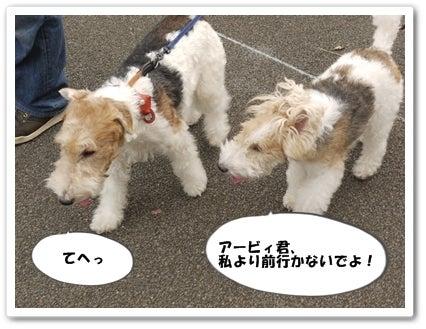 $ワイヤーフォックステリア Debby blog
