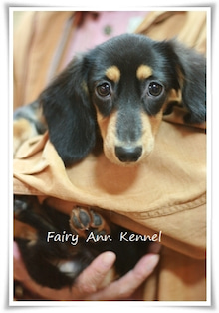 $Fairy Ann Kennel