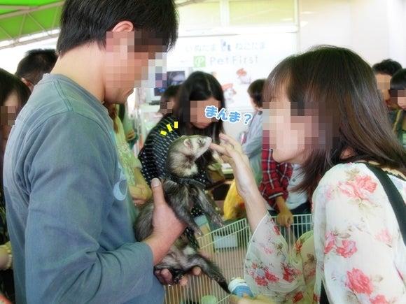 ふぇれちゅきっ。-20121022_05