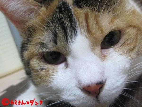 $カミさんとダンナの猫ブログ-猫アップ