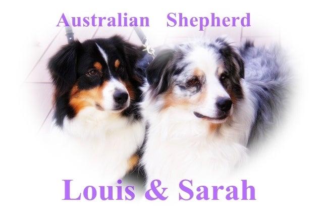 $オーストラリアンシェパード 『ルイ&サラ』