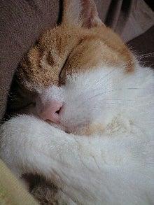 ずれずれブログ…湘南で猫と暮らせば…-121023_1526~0001.jpg