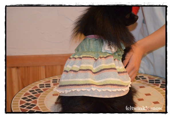 手作り犬服 twinklesnow&merci Bのブログ
