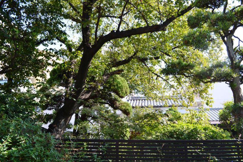 中 九兵衛のブログ 大和川流域歳時記