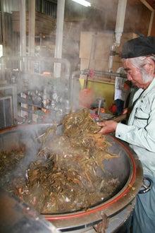 沖縄オーガニックコスメ「琉白(るはく)」公式ブログ-蒸留後