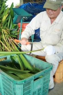 沖縄オーガニックコスメ「琉白(るはく)」公式ブログ-1枚1枚