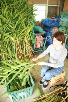 沖縄オーガニックコスメ「琉白(るはく)」公式ブログ-難しい