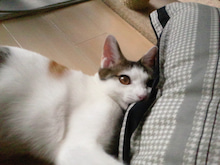PFL★MIKIのブログ-2012102610250000.jpg