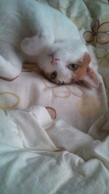 2ニャンズと三十路独女のブログ-20121022092253.jpg
