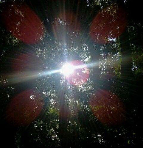 生田の森にて