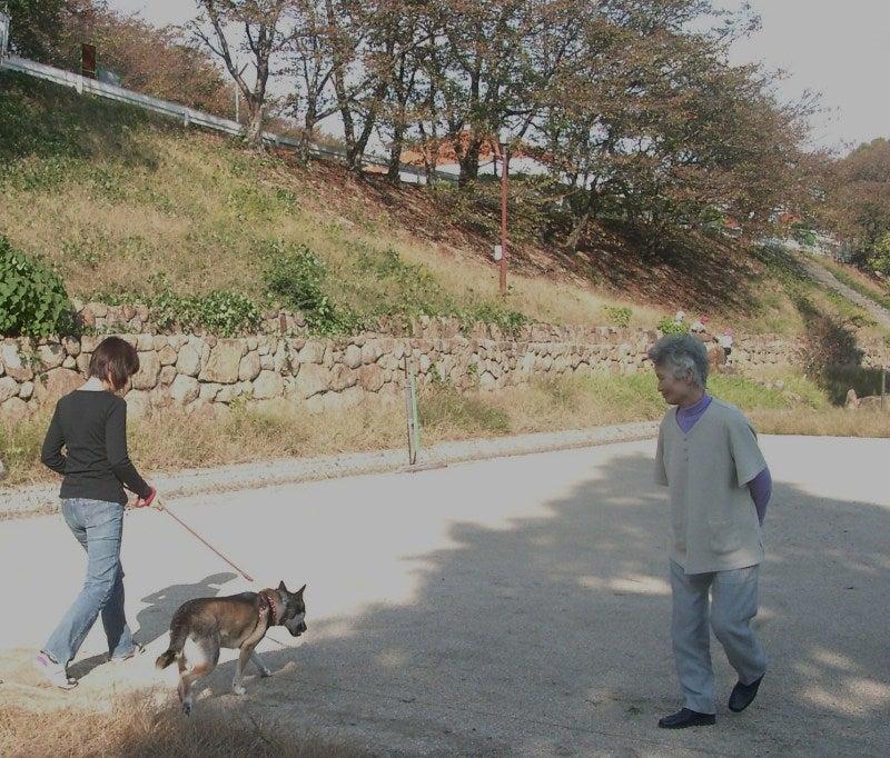 $犬猫と共に歩く~森の小径~