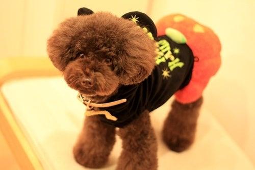 lealea*toypoo-2012.10.28 02