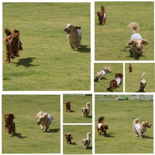 旅犬Lani&Leaのほほん風船記-湯布院ガーデンホテル