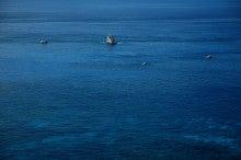小笠原のエコツアー 小笠原旅行 小笠原観光 小笠原の情報と自然を紹介します-ボニンブルー