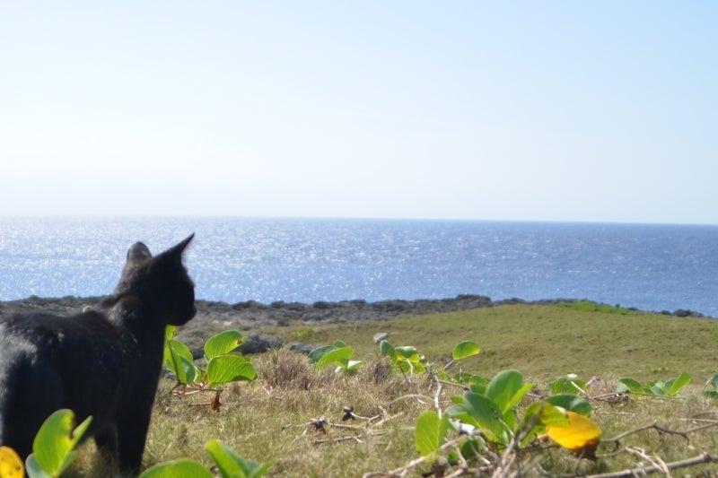「僕」、日本(チャリ)と世界一周します。-DSC_9821.JPG