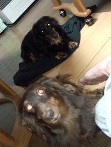 犬太郎が来た!-IMG_20121029_203354.jpg