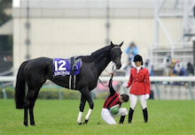 ミスプロの海外競馬-ミルコ