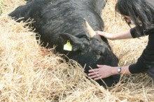 NGO Hoshi Family Animal Welfarのブログ