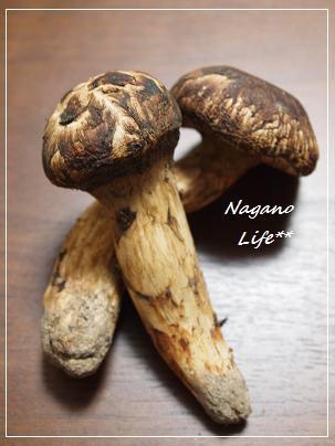 Nagano Life**-松茸