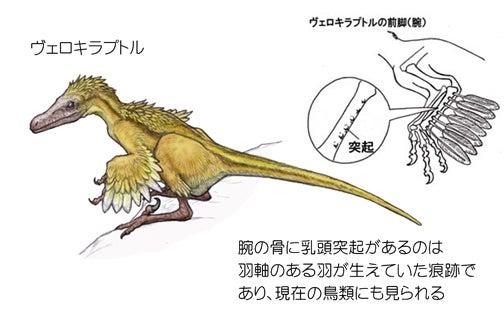 川崎悟司 オフィシャルブログ 古世界の住人 Powered by Ameba-翼を持つ証拠