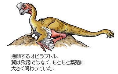 川崎悟司 オフィシャルブログ 古世界の住人 Powered by Ameba-抱卵するオビラプトル