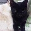 黒猫豆太郎
