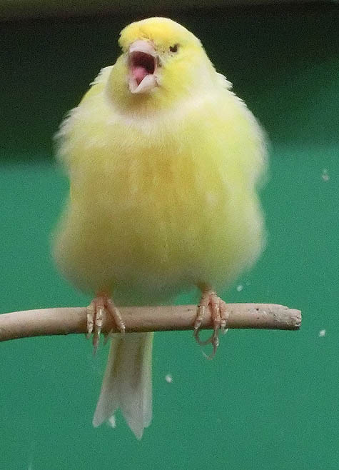ようこそ!とりみカフェ!!~鳥カフェでの出来事や鳥写真~-10