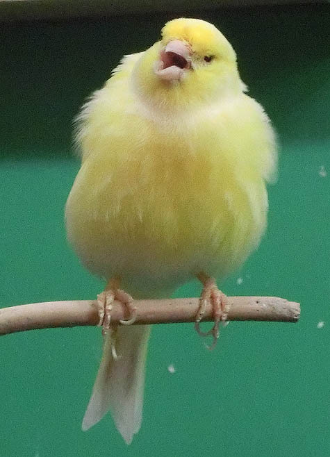 ようこそ!とりみカフェ!!~鳥カフェでの出来事や鳥写真~-01