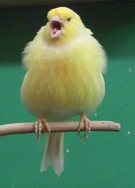 ようこそ!とりみカフェ!!~鳥カフェでの出来事や鳥写真~-08