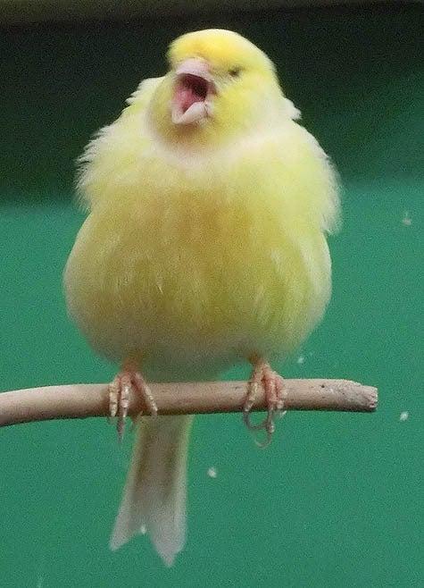 ようこそ!とりみカフェ!!~鳥カフェでの出来事や鳥写真~-05