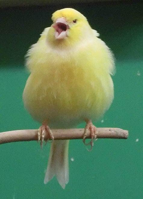 ようこそ!とりみカフェ!!~鳥カフェでの出来事や鳥写真~-07