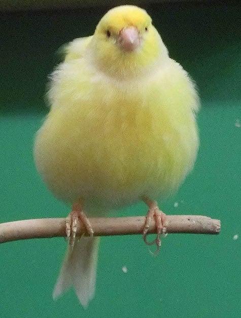 ようこそ!とりみカフェ!!~鳥カフェでの出来事や鳥写真~-14
