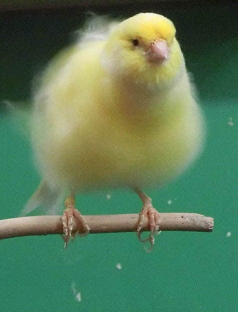 ようこそ!とりみカフェ!!~鳥カフェでの出来事や鳥写真~-22