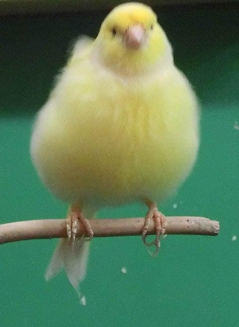ようこそ!とりみカフェ!!~鳥カフェでの出来事や鳥写真~-16