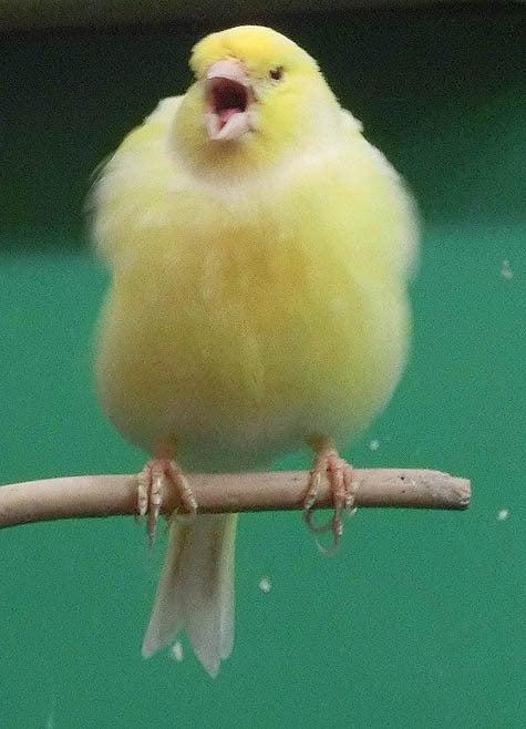 ようこそ!とりみカフェ!!~鳥カフェでの出来事や鳥写真~-11