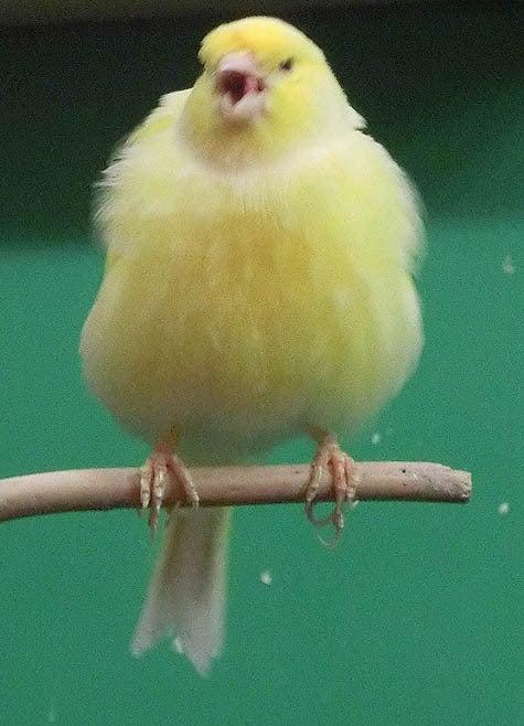 ようこそ!とりみカフェ!!~鳥カフェでの出来事や鳥写真~-12