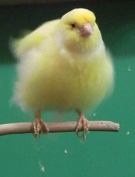 ようこそ!とりみカフェ!!~鳥カフェでの出来事や鳥写真~-25