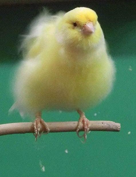 ようこそ!とりみカフェ!!~鳥カフェでの出来事や鳥写真~-24