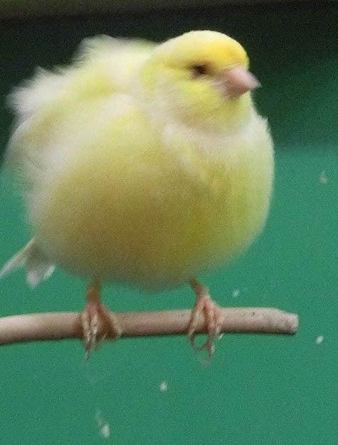 ようこそ!とりみカフェ!!~鳥カフェでの出来事や鳥写真~-27