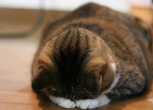 村主章枝オフィシャルブログ「すぐりふみえの ぐりぐり日記」Powered by Ameba