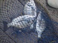 刃釣会:HACHOUKAI:                      ~チヌを愛する筏釣り師~