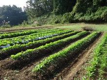 味噌玉日記-野菜畑