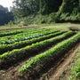 我が家の野菜畑