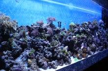 沼津港深海水族館・シーラカンスミュージアム公式ブログ